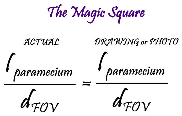 the-magic-square